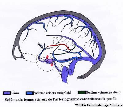 cerebral veins